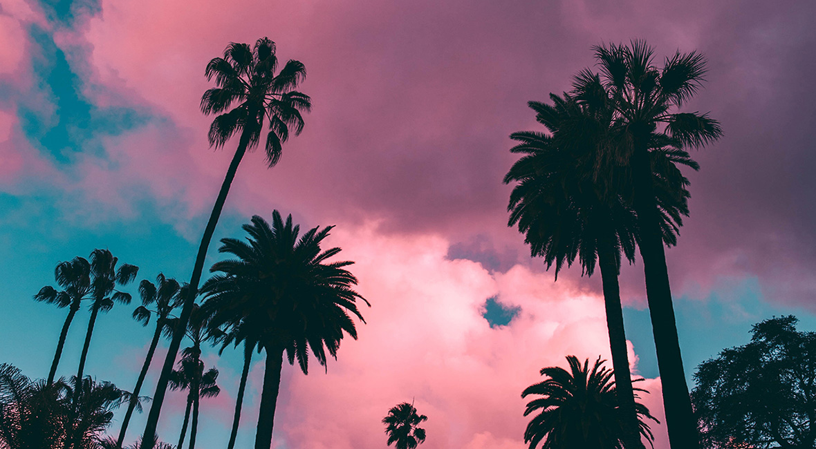 Silhouettes of tall, broad palm trees against sunset light with fluffy pink clouds and deep blue sky.